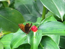 A butterfly perched on the leaf. Royalty Free Stock Images