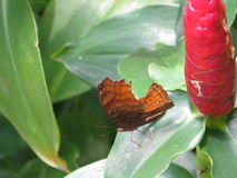 A butterfly perched on the leaf. Stock Photography