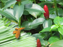 A butterfly perched on the leaf. A butterfly perched on the leaf in Taman Suropati Menteng, Jakarta, Indonesia Stock Images
