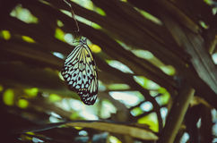 Butterfly perched on palm leaf, wings are hanging down. Some light bokeh on background Stock Images
