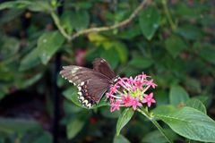 Butterfly Perched on Pink Flowers Stock Photos