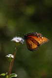 Butterfly perched on wild flower vertical Stock Photo