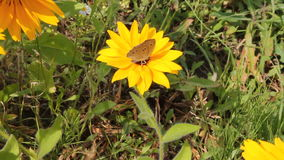 Butterfly perching on a flower stock footage