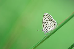 Butterfly perching on greem leaves  as background Stock Photography