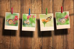 Butterfly photo Royalty Free Stock Photography