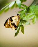 Butterfly. This is a photo of a butterfly on a tree leaf Stock Photo