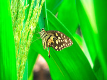 Butterfly.. Stock Photos