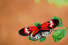 Butterfly, piano key on blurred background Royalty Free Stock Photography