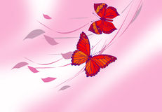 Butterfly picture Stock Photos