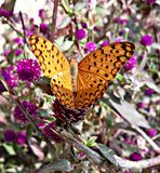 Butterfly. Picture of butterfly click by me royalty free stock photography