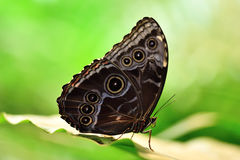 Butterfly. Picture of a butterfly sitting on a leaf Royalty Free Stock Photography