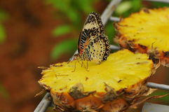 Butterfly on a pineapple Stock Photography