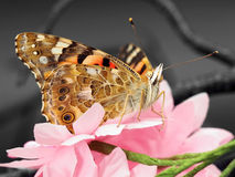 Butterfly on pink artificial flowers Royalty Free Stock Photo
