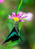 Butterfly and pink flower Stock Image