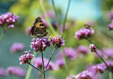 Butterfly. On a pink flower Royalty Free Stock Image