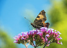 Butterfly. On a pink flower Stock Photos