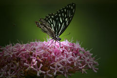 Butterfly & pink flower Stock Photo