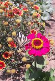 Butterfly on a pink flower stock images