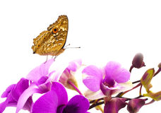 Butterfly on pink Orchid flower Royalty Free Stock Photos