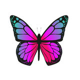 The butterfly with pink wings Royalty Free Stock Image