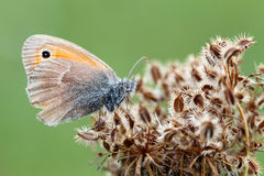 Butterfly on planet Stock Image