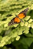 Butterfly on plant. A butterfly has landed on a green plant Royalty Free Stock Image