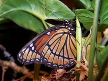 Butterfly on plant. A butterfly perch on a house plant stock photo