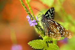 Butterfly on plant stock images