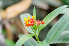 Butterfly plant blur background taken in the daytime at springtime Royalty Free Stock Image