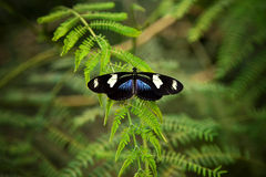 Butterfly on a plant Stock Photo