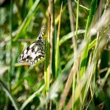 Butterfly on a plant Royalty Free Stock Image