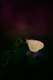 Butterfly on plant Royalty Free Stock Photos