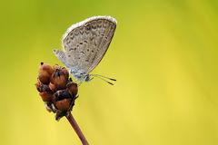 Butterfly on a plant Royalty Free Stock Photos