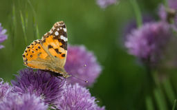 A butterfly. On the plant in summer Stock Images