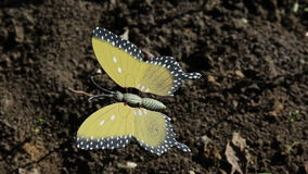 Butterfly plastic decoration in the wind stock footage