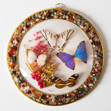 Butterfly plate composition Stock Photo