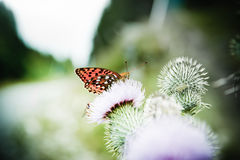Butterfly poised on flower Stock Image