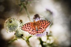 Butterfly poised on flower Stock Photo
