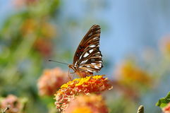 Butterfly poised on flower Royalty Free Stock Photography