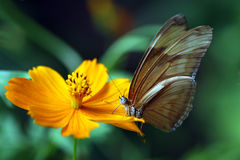 Butterfly pollinating flower Stock Photo