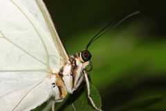 Butterfly portrait Royalty Free Stock Images