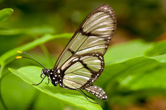 Butterfly posing on grass Stock Image