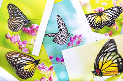Butterfly postcard. Stack of butterfly postcard, All image belongs to me Stock Photo