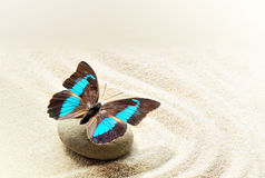 Butterfly Prepona Laerte on the sand Stock Image