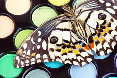 Butterfly on professional make -up eyeshadows Stock Image