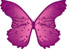 Butterfly Purple Royalty Free Stock Images