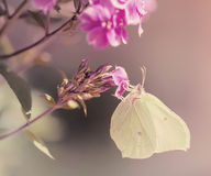 Butterfly on purple flower Royalty Free Stock Photo