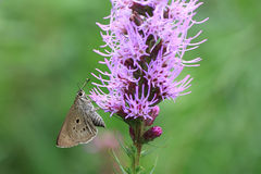 Butterfly and purple flower Royalty Free Stock Photo