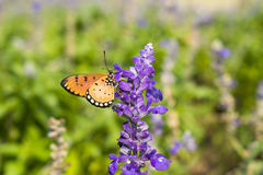 Butterfly on purple flowers blurred background.  Stock Images