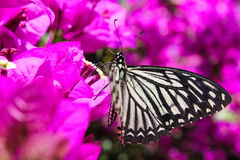 Butterfly on purple flowers Stock Images